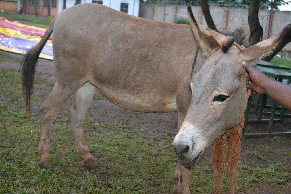 Donkey Is Friendly