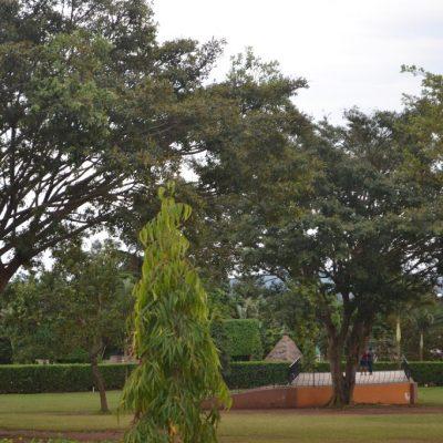 Environmental Protection Through Tree Planting